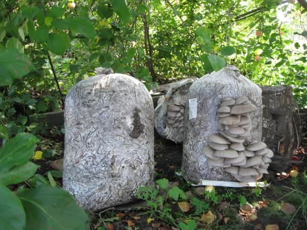 Как организовать бизнес по выращиванию грибов в частном доме