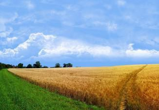 бизнес план растениеводство