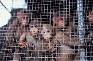 Торговля дикими животными