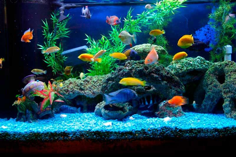 Business idea on earnings to aquarium fishes and plants1
