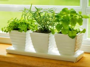 Как правильно вырастить зелень на продажу