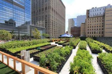 Садоводческие фермы в мегаполисах