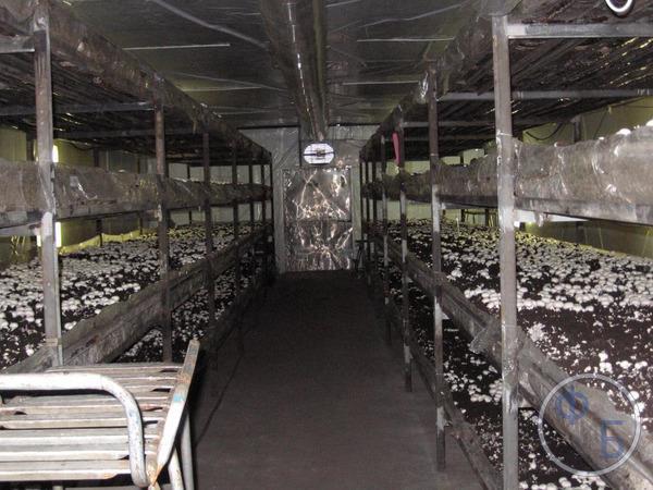 Выращивание грибов в подвале гаража
