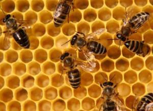 Рисунок пчел, которые наполняют соты нектаром