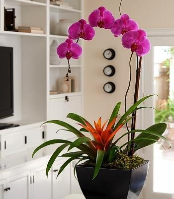 Выращивание комнатных цветов.