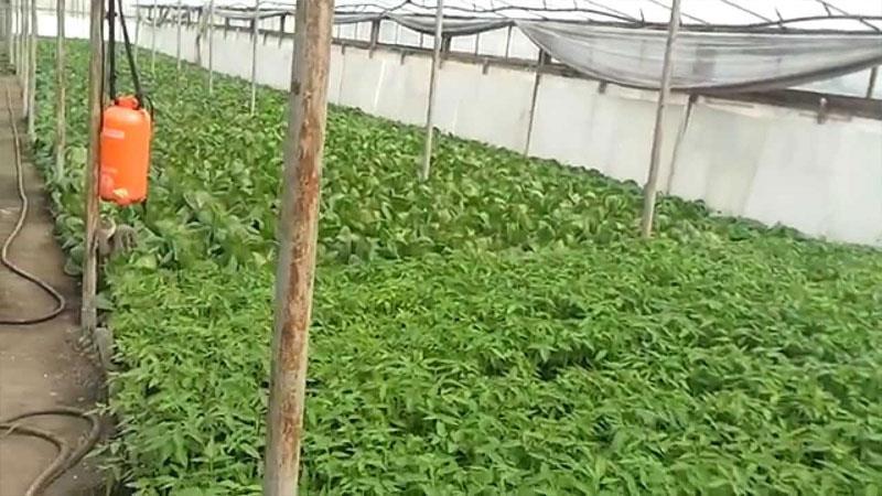 Тепличный бизнес - что выгодно выращивать