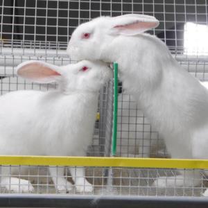 Открываем частное хозяйство по разведению кроликов