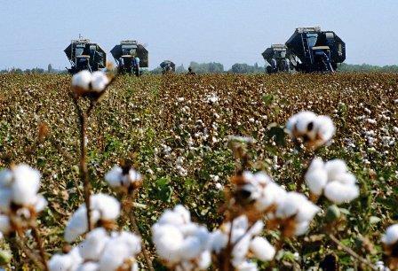 Казахстанский агробизнес