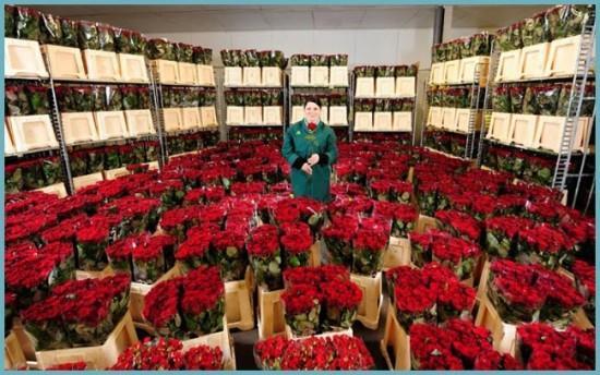 как хранить розы перед продажей
