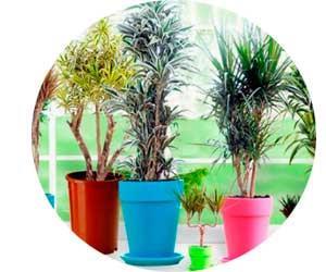 Выращивание и продажа комнатных растений