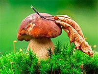 Разведение грибов на продажу