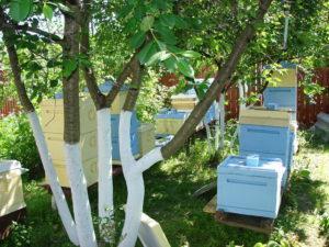 бизнес на пчелах с нуля