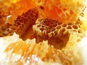 небольшой бизнес-план по пчелам