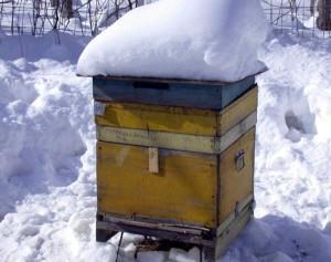 сезонность пчеловодства