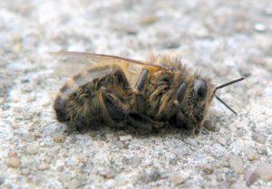 сложности пчеловодства
