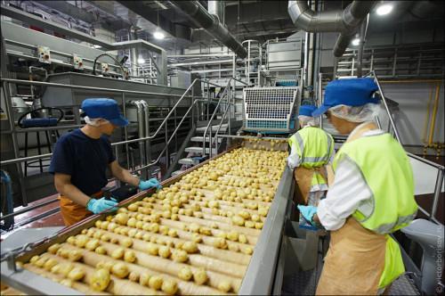 бизнес план по производству чипсов
