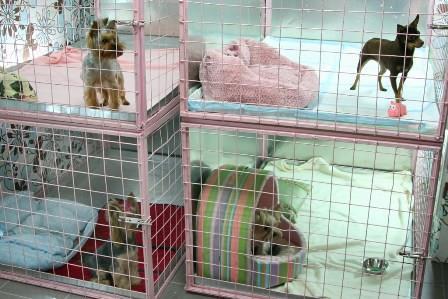 Открыть гостиницу для животных