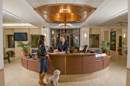 Гостиница для животных бизнес-план