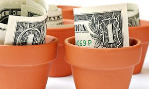 Вырастим доходы