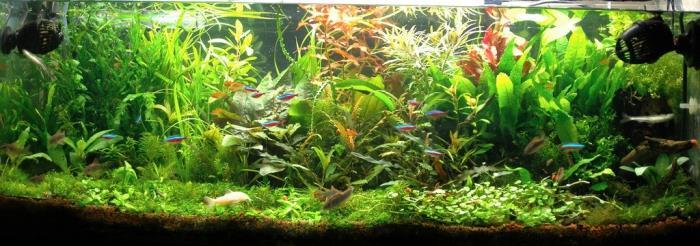 разведение домашних рыбок