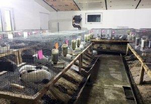 Мини ферма кроликов калифорнийской породы