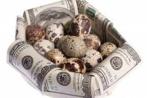 Подсчет прибыли от перепелиного бизнеса