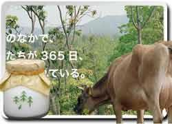 Бизнес идея № 1447. Лесное молоко от коров из лесной фермы