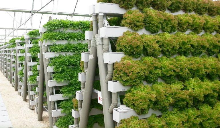 Чтобы сохранить урожай, нужно предусмотреть систему поддержания постоянной температуры