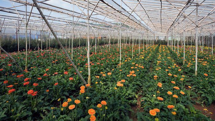 Выбор культуры для выращивания в теплице