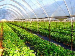 Что выгодно выращивать в теплице