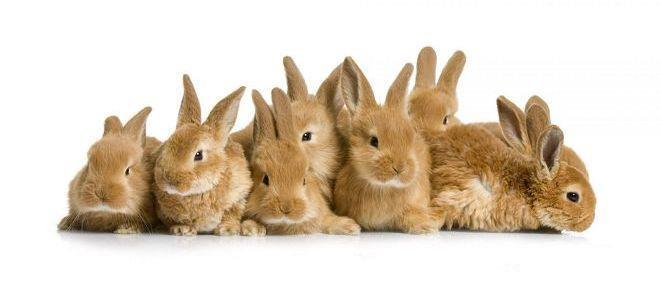 разведение кроликов в домашних условиях как бизнес