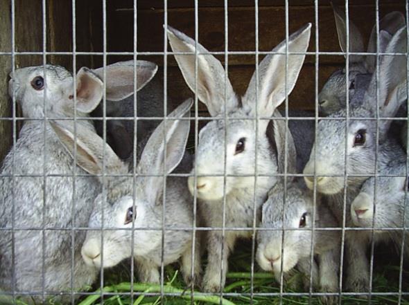 Кролики в клетке!
