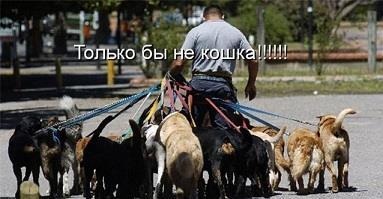 бизнес выгуливание собак