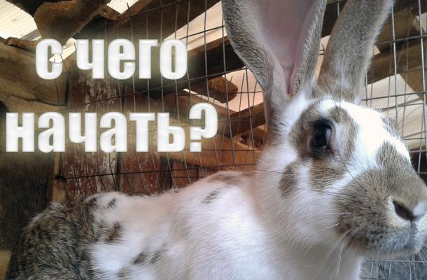 Бизнес план по разведению кроликов.