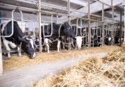 Ферма для коров
