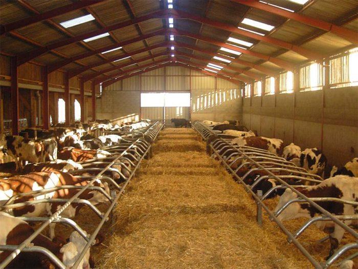 Бизнес-план по разведению коров