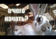 Кролиководство как бизнес. С чего начать? Как преуспеть?