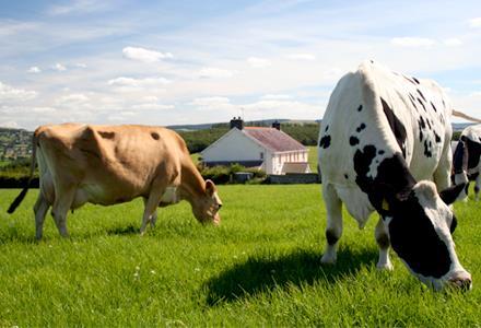 Фермерство как бизнес идея животноводство