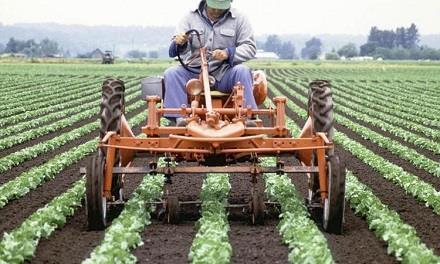 Фермерство как бизнес идея для начинающих