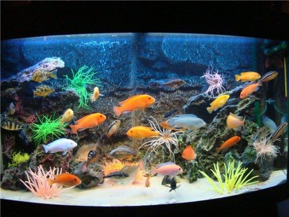 Рыбки в аквариуме!