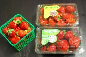 Российский бизнес по выращиванию ягод клубники