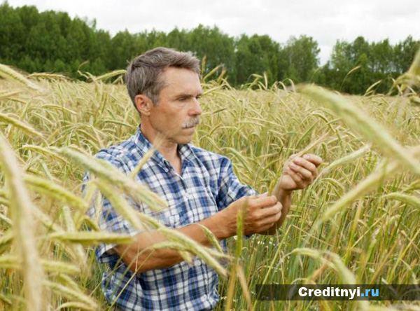 Субсидии на развитие фермерского хозяйства