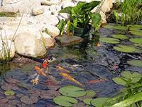 Пруд для рыбы
