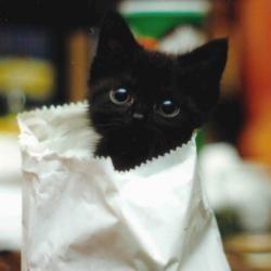 Продажа бизнеса — Не покупайте кота в мешке