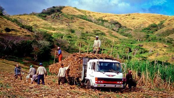 Сфера сельского хозяйства