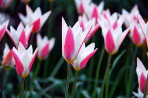 Тепличное выращивание цветов как малый бизнес