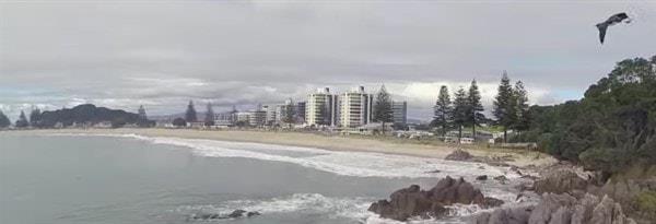 Виды бизнес-виз в Новую Зеландию