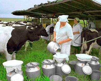 Частные фермерские хозяйства